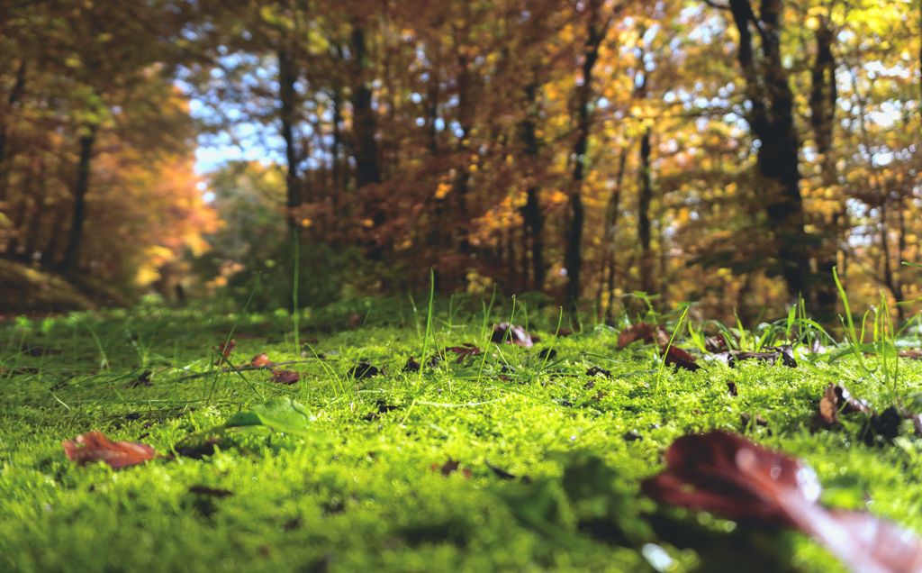 autumn campaign inspiration
